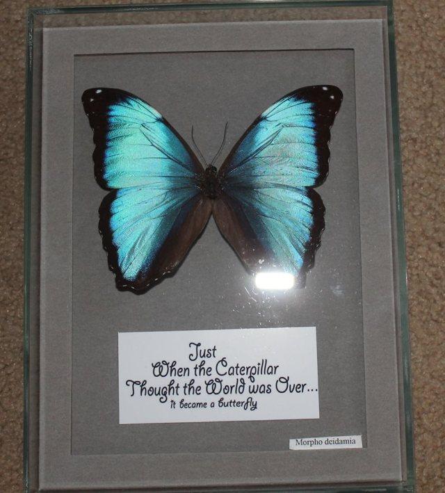 butterfly behind glass.jpg